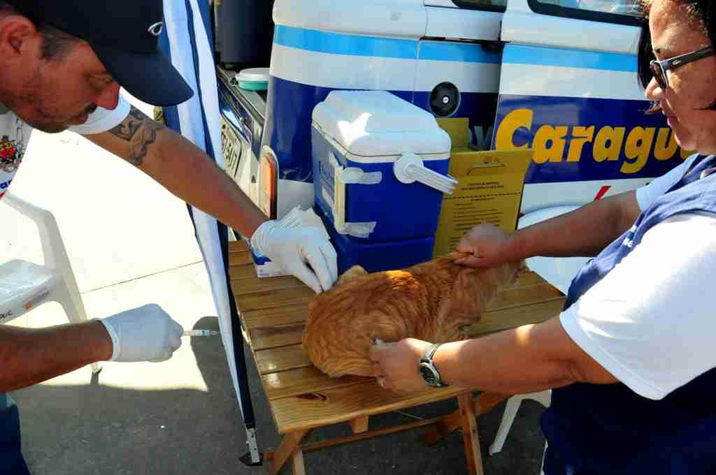 Caraguatatuba realiza campanha de vacinação antirrábica a partir de 31 de julho (Fotos: Luís Gava/PMC)