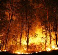 Prefeitura alerta para proibição de queimadas em zona urbana do município