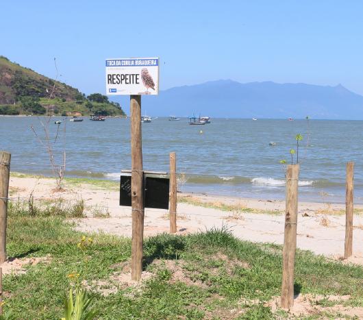 Projeto Toca das Corujas visa proteger e preservar os animais que habitam a orla das praias