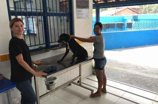 No bairro Jetuba, Centro de Controle de Zoonoses encaminha 40 animais para castração
