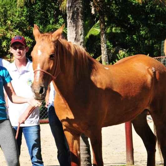 Acalento promove atividade prática com cavalos em comemoração ao Dia Nacional da Equoterapia