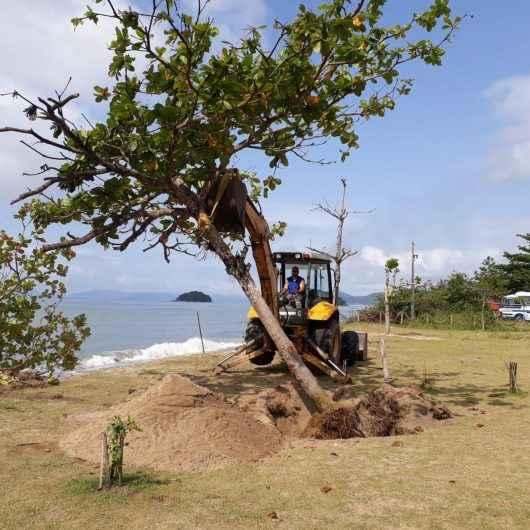 Árvores são replantadas após ressaca da maré na Praia da Mococa