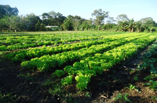 Inscrições abertas para 5ª Oficina da Agricultura Familiar