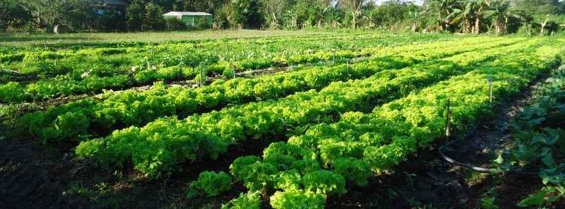 5ª Oficina da Agricultura Familiar segue com inscrições abertas