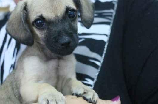 Feira de adoção do CCZ atrai cerca de 20 pessoas e animais são adotados