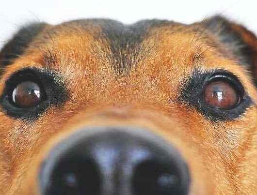 CCZ realiza feira para adoção responsável de cães e gatos neste sábado (09)