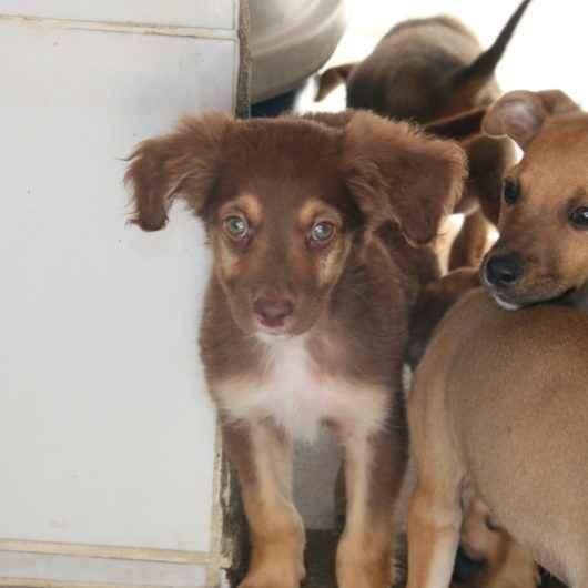 Prefeitura publica chamamento para credenciamento de clínicas veterinárias para castração