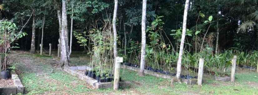 No Dia do Meio Ambiente, Caraguatatuba destaca projeto do Viveiro Municipal com plantas nativas