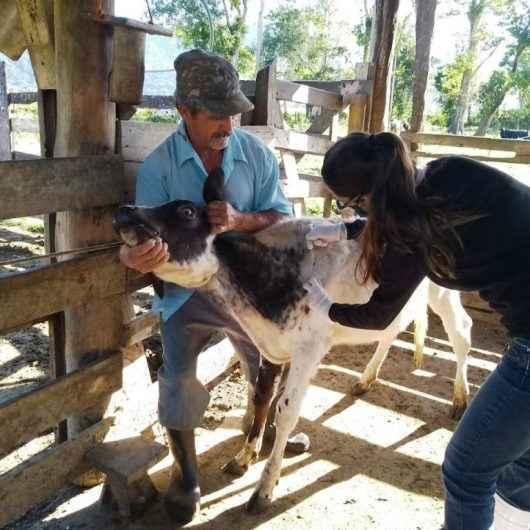 Campanha contra brucelose bovina atende cerca de 50 animais