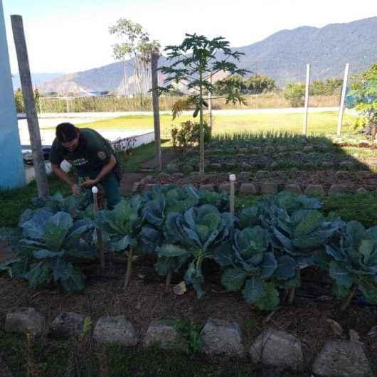 Pais e alunos recebem kit com verduras e temperos cultivados em horta educativa