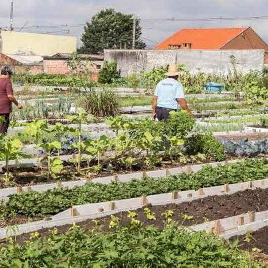 Prefeitura de Caraguatatuba cria projeto 'Horta Comunitária no seu bairro'