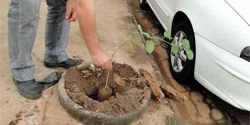 Prefeitura dá continuidade ao plantio de árvores em escolas da cidade