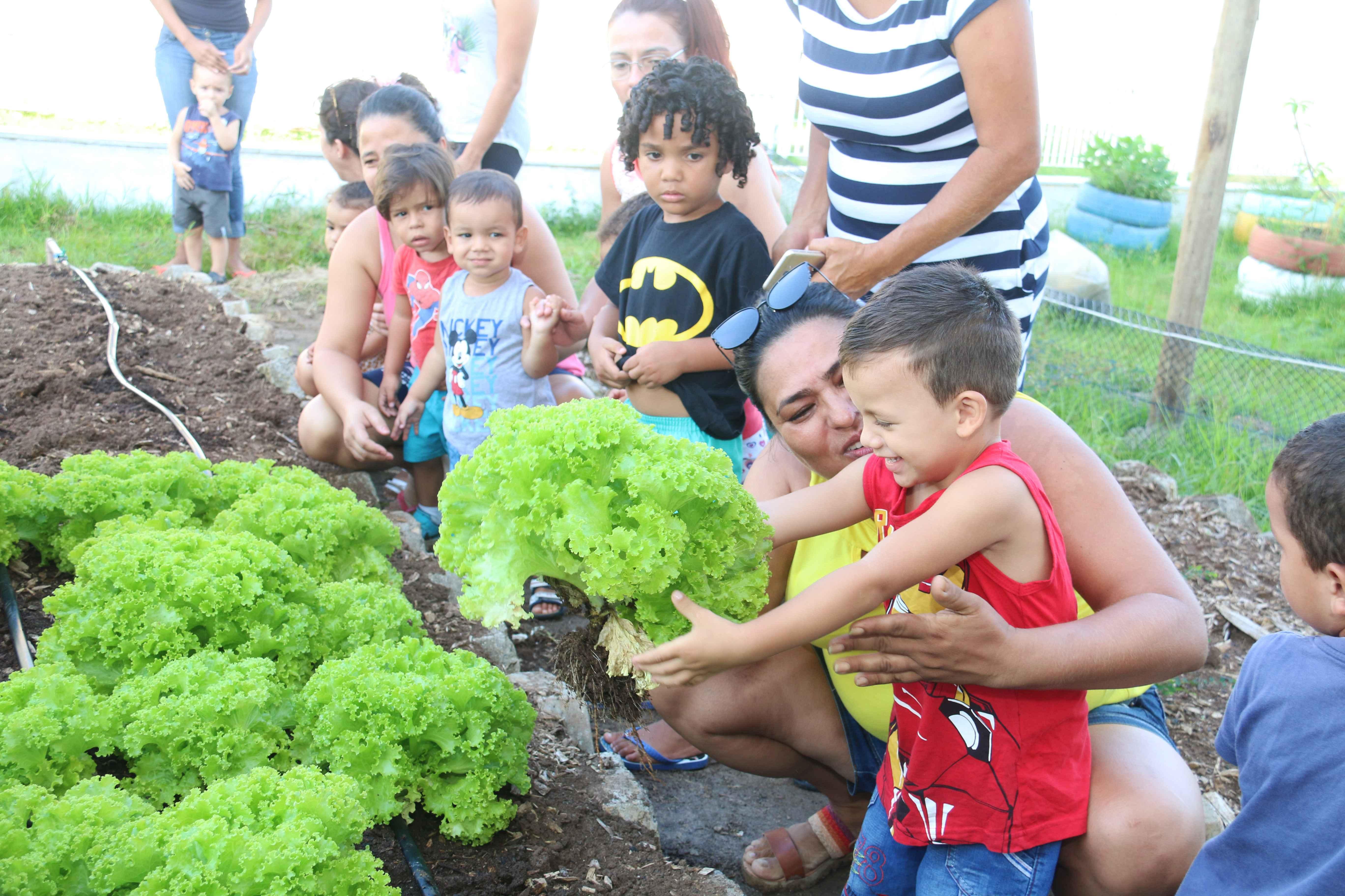 """""""Horta em Movimento"""" tem primeira colheita no Perequê Mirim"""