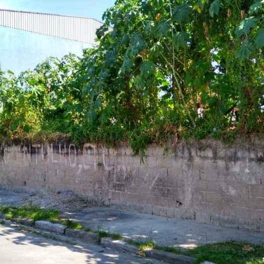 Prefeitura de Caraguatatuba autua dono de terreno baldio na região sul da cidade
