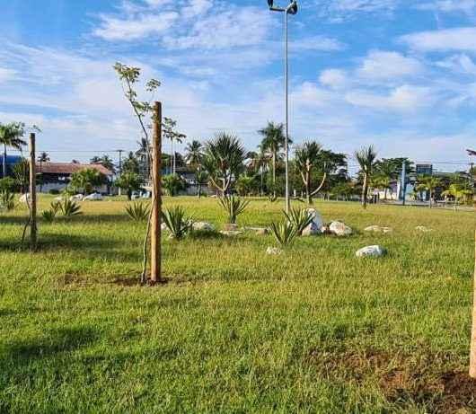 Prefeitura de Caraguatatuba planta mudas nativas em praças da cidade