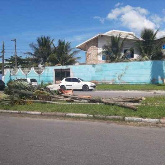 Morador é flagrado jogando resto de poda em via pública e Prefeitura dá prazo de 24 horas para fazer limpeza