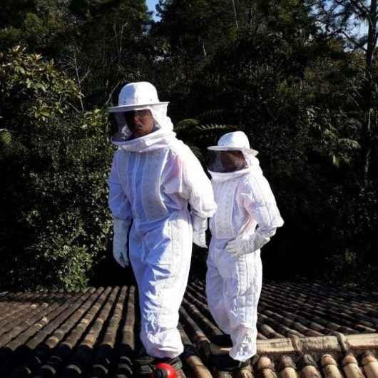 Captura de abelhas volta a ser principal ocorrência atendida pela Defesa Civil em março