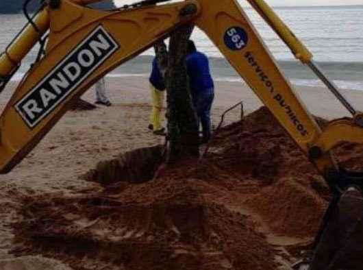 Prefeitura faz replantio de árvores atingidas pela ressaca na praia Martim de Sá