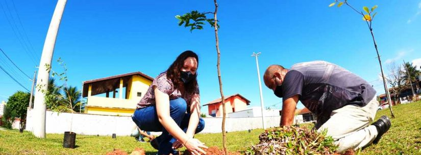 Caraguatatuba inicia projeto de arborização urbana no bairro Massaguaçu