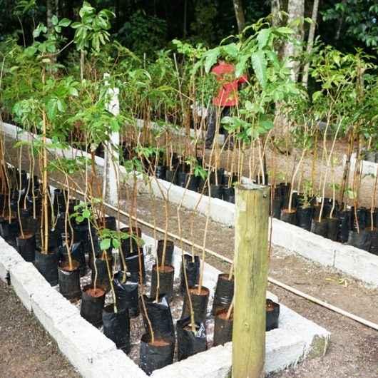 Caraguatatuba promove Mês do Ambiente com diversas ações de educação ambiental
