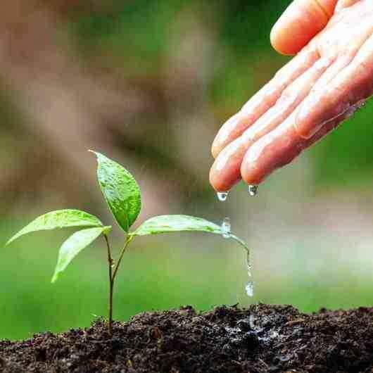 FUNDACC e Conselho Municipal de Política Cultural de Caraguatatuba apresentam 'Semana do Meio Ambiente - Mostra de Cultura e Sustentabilidade'