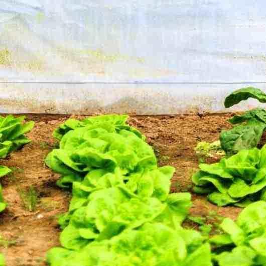 FUNDACC abre inscrições para Oficina de Hortas Agroecológicas em comemoração ao Mês do Meio Ambiente e Ecologia