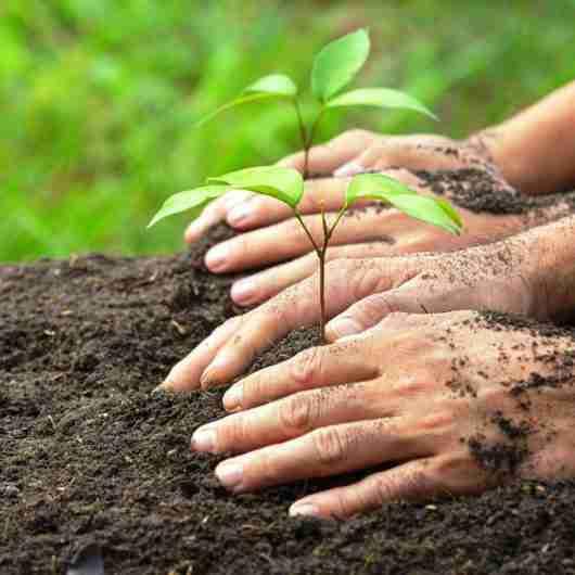 FUNDACC, Secretaria de Meio Ambiente e E. E. Dr. Eduardo Correa da Costa Jr. realizam plantio de mudas em comemoração ao Mês do Meio Ambiente