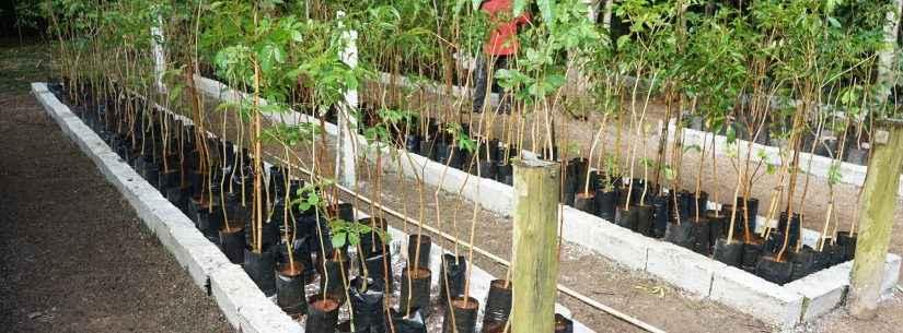 No mês do Meio Ambiente, conheça os projetos de preservação e arborização desenvolvidos em Caraguatatuba