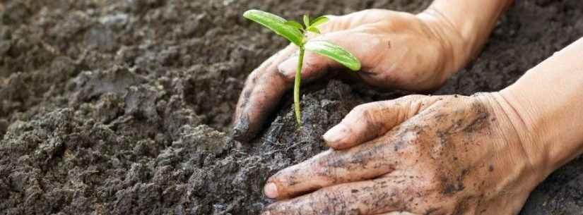 Mês do Meio Ambiente entra na última semana comemorativa em Caraguatatuba