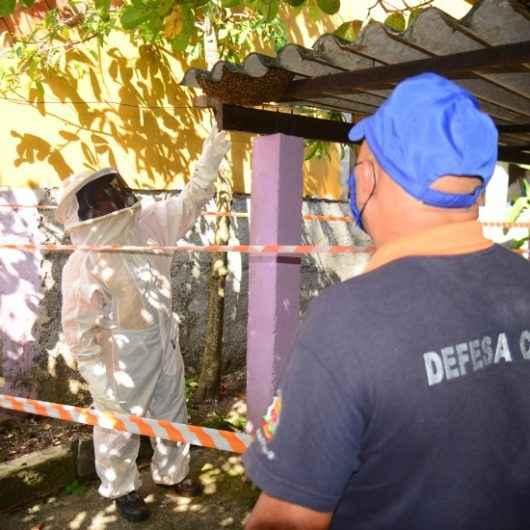 Em seis meses, Defesa Civil de Caraguatatuba atende 161 ocorrências de abelhas