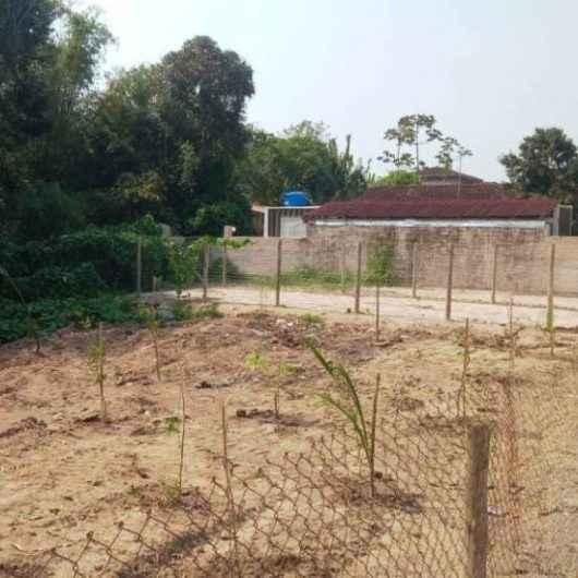 Prefeitura faz plantio de mudas em ponto viciado de descarte irregular no Massaguaçu