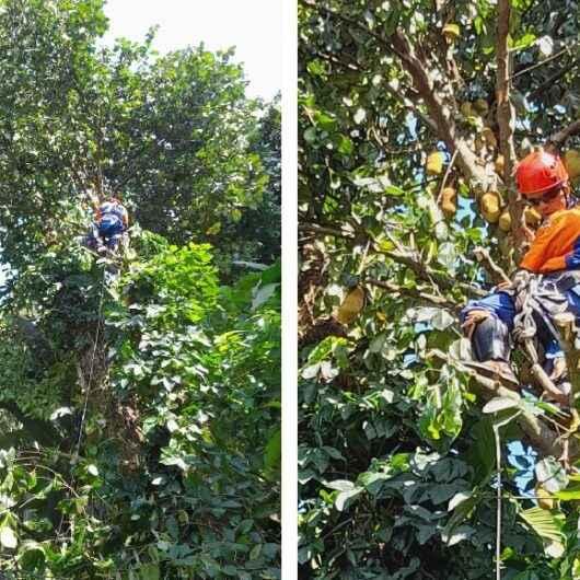 Equipes da Defesa Civil de Caraguatatuba cortam árvores derrubadas após fortes chuvas
