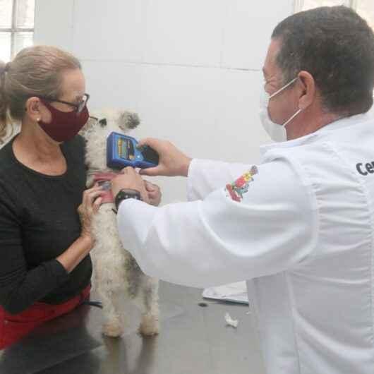 CCZ de Caraguatatuba agenda 400 animais para castração em apenas um dia