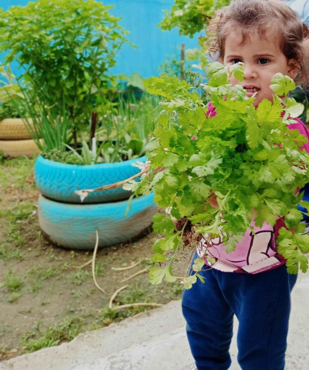 Projeto Horta Educativa já conta com mais de 30 unidades em Caraguatatuba