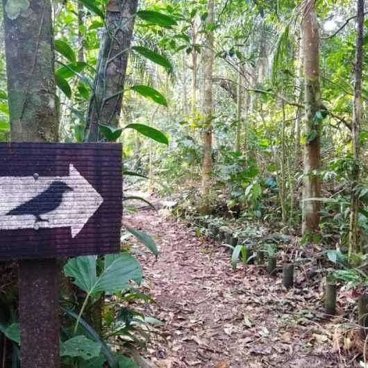 Parque Estadual da Serra do Mar promove trilhas, observação de aves e atividades infantis em Caraguatatuba