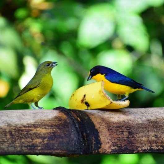 Comedouro de aves do Parque Estadual da Serra do Mar atrai mais de 40 espécies em Caraguatatuba
