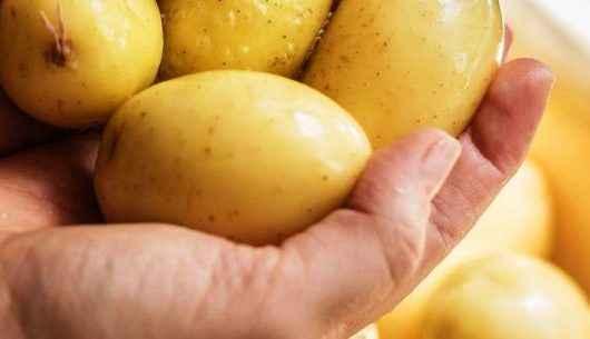 Caraguatatuba abre inscrições para curso de Boas Práticas de Manipulação de Alimentos